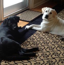 The Chamberlain dogs