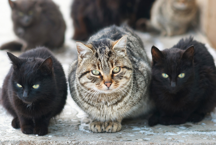 cat hoarding: group of cats